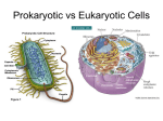 Prokaryotic vs Eukaryotic Cells