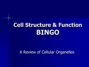 Cell Structure & Function BINGO