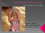 Cell Division/Cell Cycle