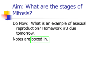 Mitosis - World of Teaching