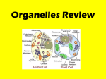 Organelles Quiz Review