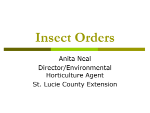Insect Orders - St. Lucie County Extension Office