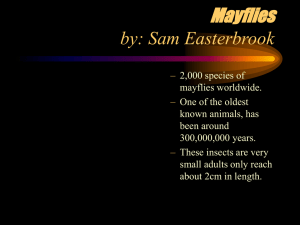 Mayflies by: Sam Easterbrook
