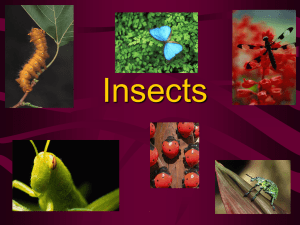 Insects Power Point notes