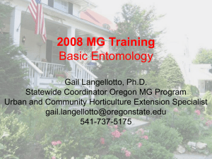 MG Training Entomology 2008