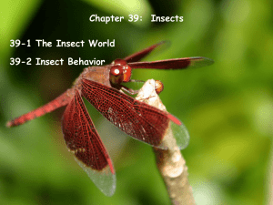 Chapter 39-Insects