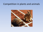 Competition in plants and animals