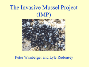 The Blue Mussel Project - University of Puget Sound