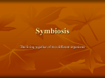 Symbiosis - Byron Senior High School