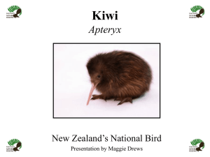 The Kiwi - Nga Manu Nature Reserve