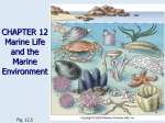 Chapter 12: Marine life and the marine environment