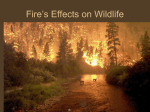 Fire and Wildlife