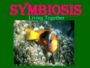 Symbiosis Power Point