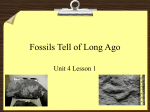 Fossils Tell of Long Ago