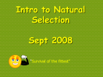 Intro to Natural Selection Sept 2008