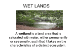 wet lands - Cloudfront.net
