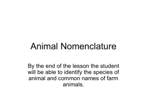 Animal Nomenclature Power Point