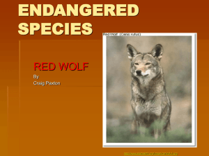 Endangered_Project_Paxton - Etiwanda E