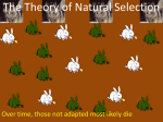 Which rabbit is best adapted?