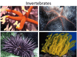 Invertebrates - Cloudfront.net