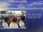 penguins by aidan - TrilliumLearning.com