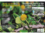 Threatened Plants of the British Virgin Islands Poke-me-boy Acacia anegadensis