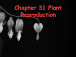 Chapter 31 Plant Reproduction