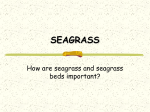 SEAGRASS & SEAWEED