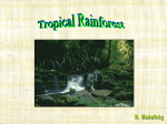 Tropical Rainforest - Bergen County Technical Schools