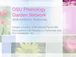 Perennials - PowerPoint file - OSU Phenology Garden Network