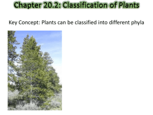 Chapter 20.2: Classification of Plants