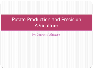 Potato Production and Precision Agriculture