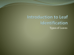 Introduction to Leaf Identification