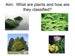 What are plants and how are they classified?