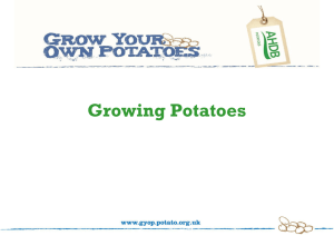Growing Potatoes (Microsoft 2007 PowerPoint)