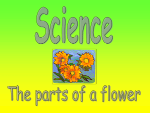 The Parts of a Flower Powerpoint Presentation
