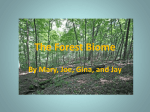 The Forest Biome - East Lyme Public Schools