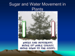 Sugar and Water Movement in Plants