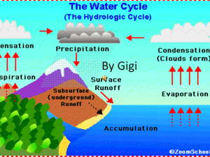 The Water Cycle By Gigi
