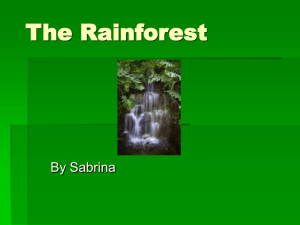 The Rainforest Sabrina web version