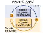 General Plant Life Cycle