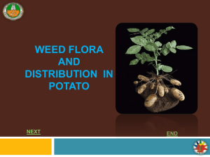 WEED FLORA AND WEED DISTRIBUTION IN POTATO