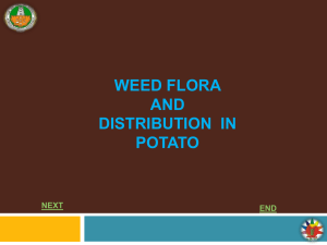 WEED FLORA AND WEED DISTRIBUTION IN POTATO NEXT