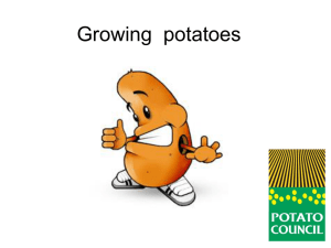 Growing potatoes - Grow Your Own Potatoes