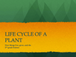 Cycle of a Plant Powerpoint