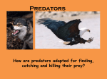 Pred and prey images