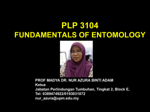 PLP 3104 FUNDAMENTALS OF ENTOMOLOGY GROUP 3