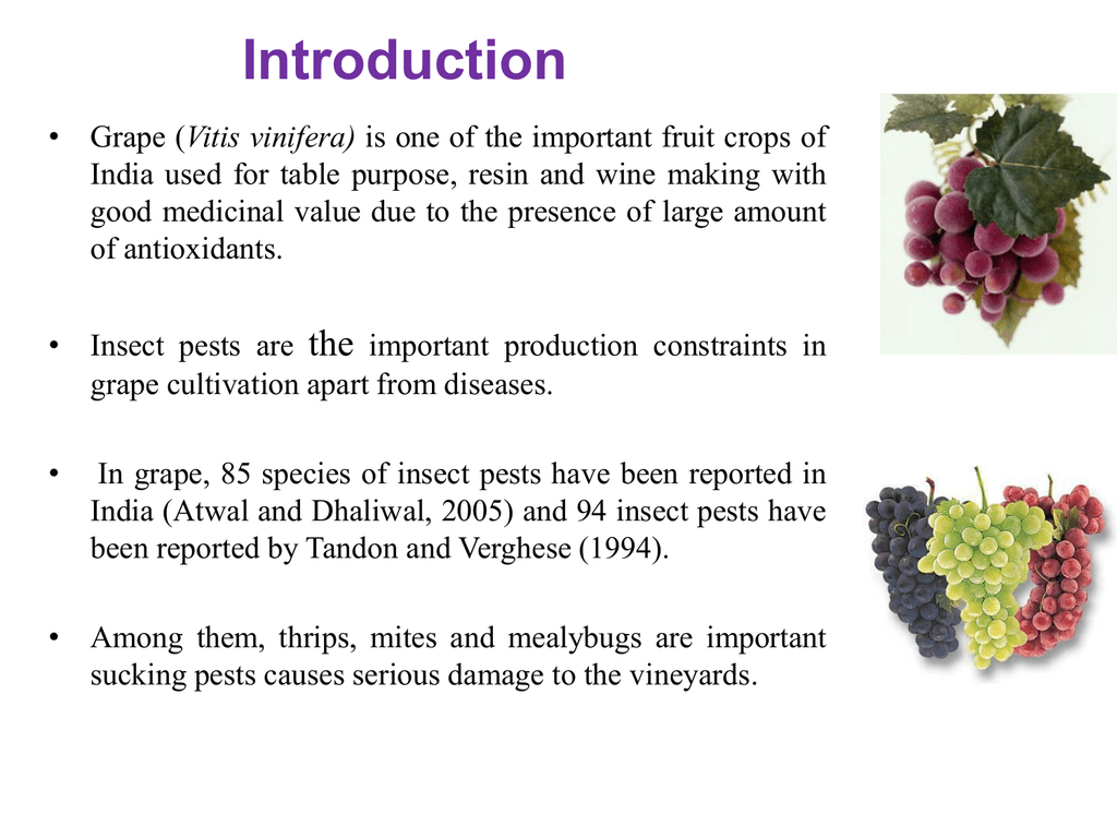 thrips, mites and mealybugs in grapes