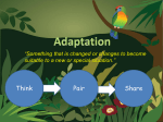 Animal_Adaptations2[1]