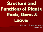 Structure and Functions of Plants: Roots, Stems & Leaves